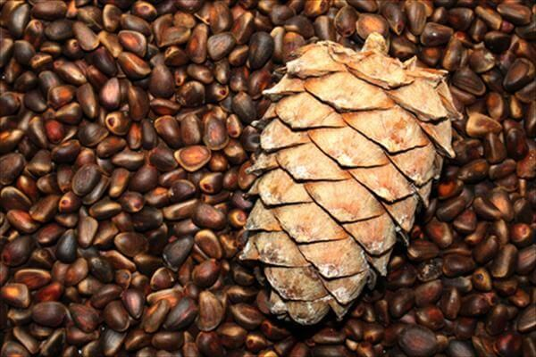 Как избавиться от аллергии на кедровые орехи
