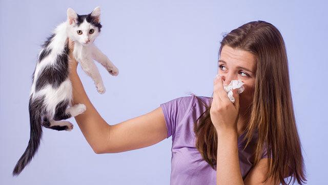 Что делать если возникает аллергическая реакция на шерсть?