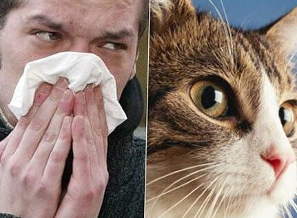 Аллергия на кошек симптомы и лечение