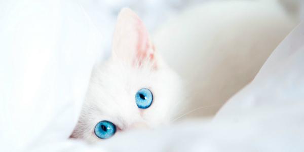 Кошка может быть причиной аллергии