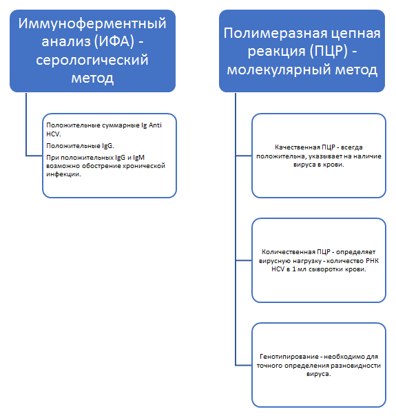 Исследования при гепатите С
