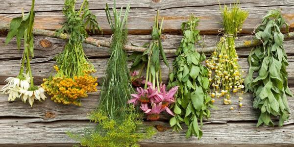 Травы от гепатита С