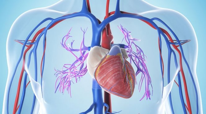 Воздействие Нитроглицерина на сердце и сосуды