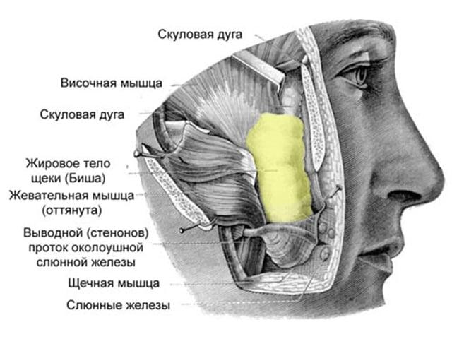 маска из клубники для лица от морщин