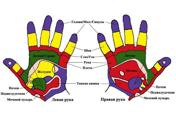 342С каким органом связаны пальцы рук