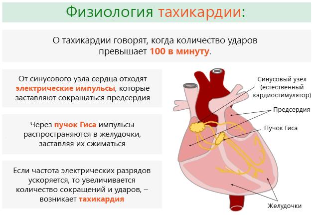 Как лечить тахикардию сердца в домашних условиях и оказать помощь ...