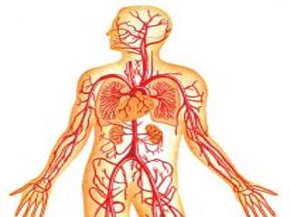 Венозная дисгемия — застой сосудов головного мозга, причины ...